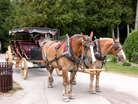 Carriage Horses - Mackinac Island